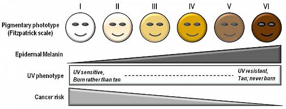 自動駕駛有望再獲大筆注資,但AI系統識別如何實現「膚色公平」還是個問題