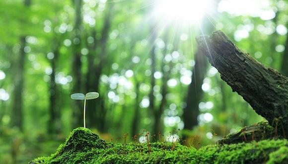 全球調查:200多年來人為因素致近600種植物消失