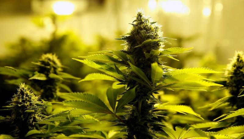 盧森堡在歐洲首推大麻合法化,屆時遊客可別輕易嘗試